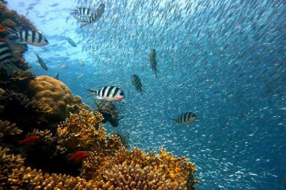 Биологи из Австралии записали хоровое пение рыб