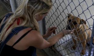 Приют для животных построят в Новой Москве