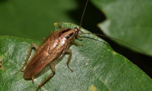 В Кемерове врачи извлекли из уха мужчины таракана
