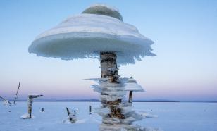 Неизвестный науке гриб найден под Тобольском
