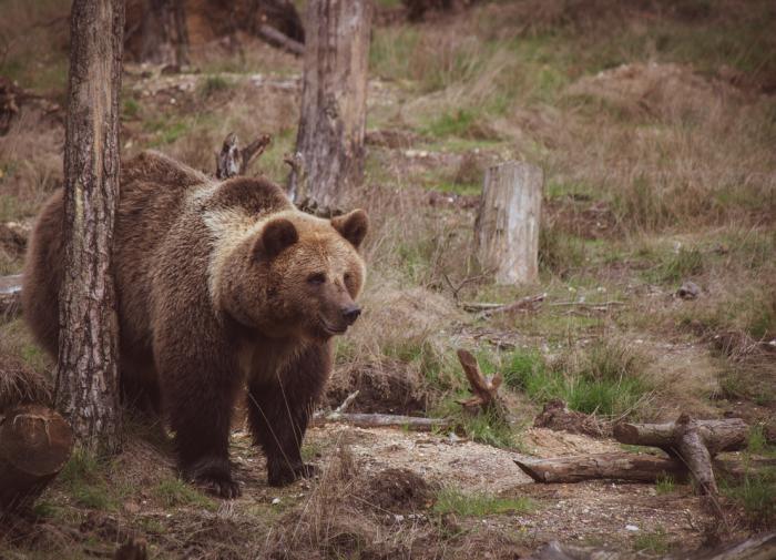 В Челябинской области гости парка встретили медведя и напугали его