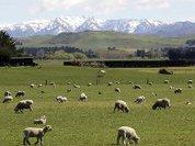 Рекордный рост экономики Новой Зеландии