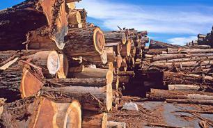 Эксперт: властям не выгодно решать вопрос о незаконных вырубках леса