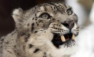 На грани исчезновения в России находятся 13 видов редких животных