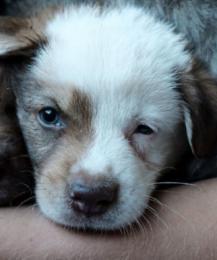 Фотограф против того, чтобы люди покупали собак. Почему?