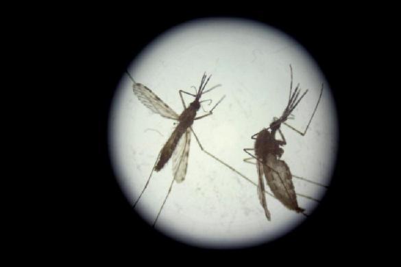 Малярия может вскоре вернуться в Европу из-за изменения климата