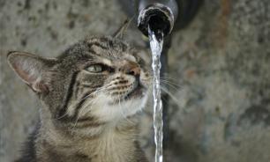 Четыре причины страха воды у кошек - Институт домашних животных Килского университета