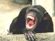 Человек отличается от обезьяны вовсе не речью