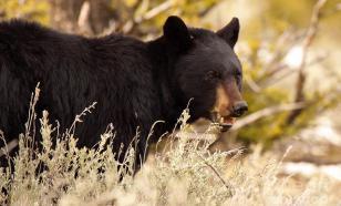 В Нижнем Тагиле медведь разрыл две могилы на местном кладбище