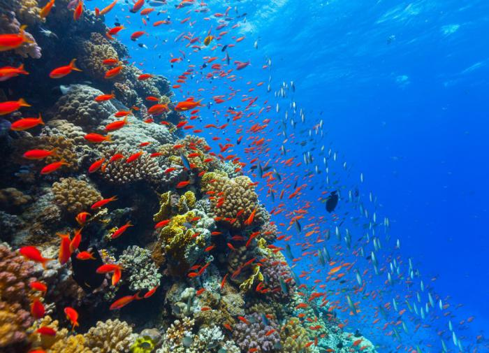 На дне океана обнаружили огромные скопления рыб