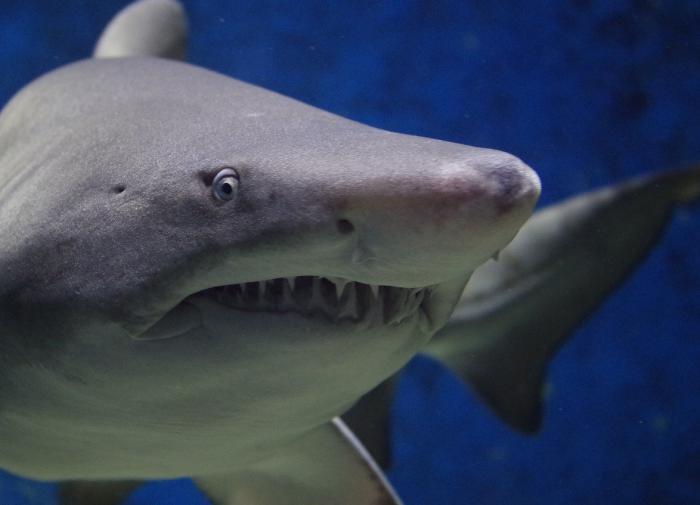 В Японии обнаружили 3000-летние останки человека, съеденного акулой
