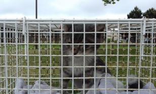 Плыл три недели, чтобы умереть: котенка, который прибыл в Шотландию в закрытом контейнере, усыпили