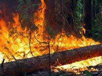 В Сибири горит почти четыре тысячи гектаров леса.