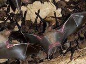 Питание муравьями полезно перед спячкой