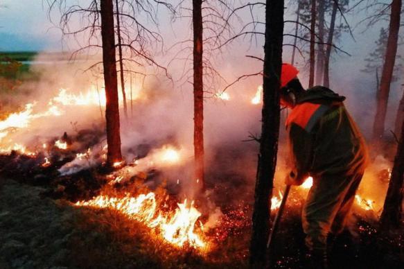 Главными причинами пожаров россияне назвали вырубки и халатность