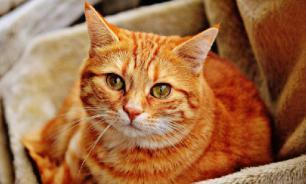 Исследование: россияне предпочитают кошек другим домашним животным