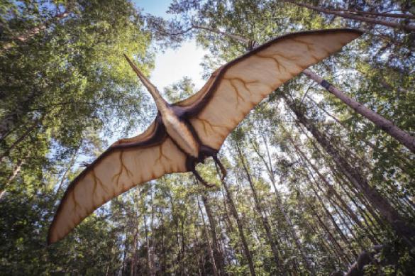 Палеонтологи: предки птиц стали теплокровными 75 млн лет назад