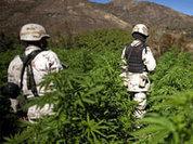 Мексика - гигант в плену наркомафии