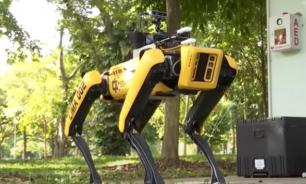 Роботы-псы обеспечат социальное дистанцирование при карантине