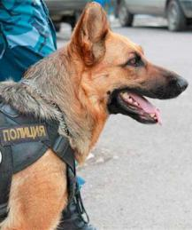 """О том, как собака стала """"полицейским"""""""