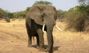 В индийском штате Тамилнад слон чуть не затоптал любителей селфи
