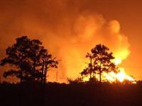 Число лесных пожаров в Сибири снизилось за сутки в 1,5 раза.
