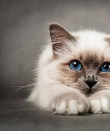 Как завоевать доверие кошки?