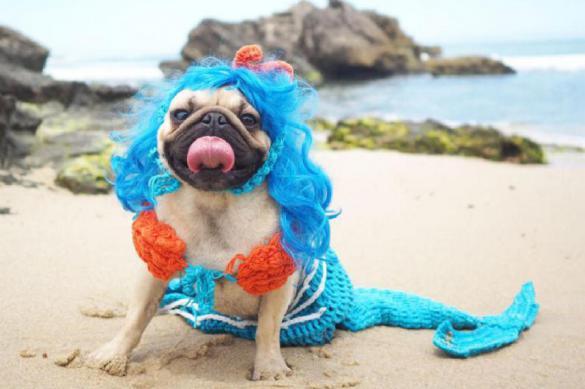 Одежда для собак: мода или необходимость?