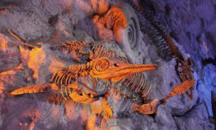 В Африке нашли рыбу возрастом 400 миллионов лет