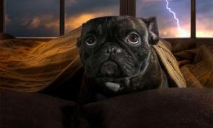 Собака боится грозы: как ей помочь
