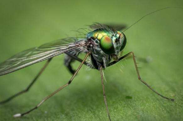 Энтомологи определили любимый цвет мухи цеце