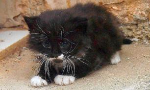 Участковый издевался над котенком в стиле ИГИЛ