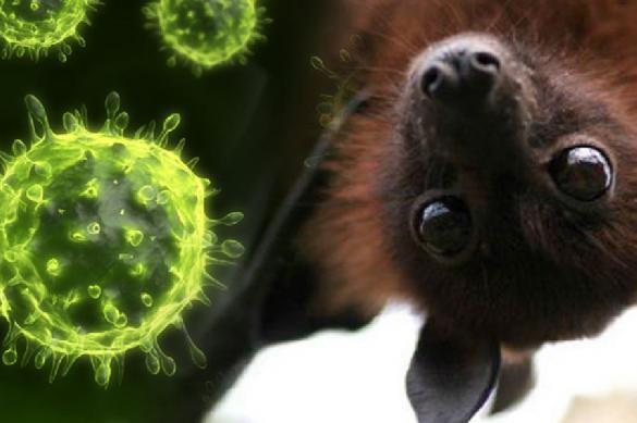 Знакомьтесь: Нипах - смертельный вирус, распространяемый летучими мышами