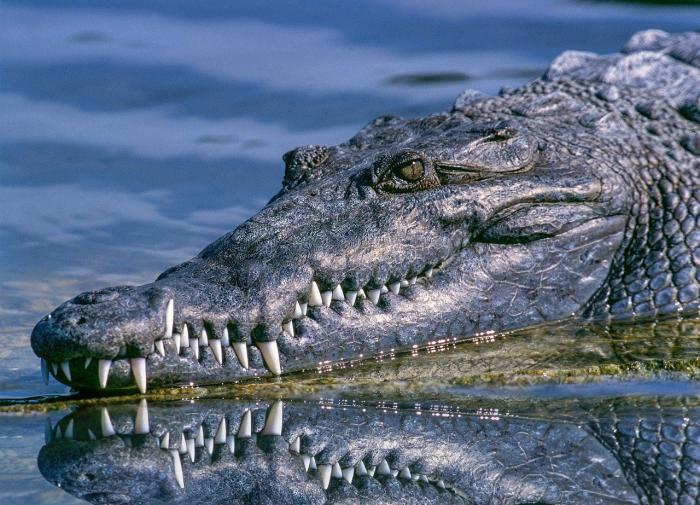Открыт новый вид крокодила, жившего более 70 млн лет назад