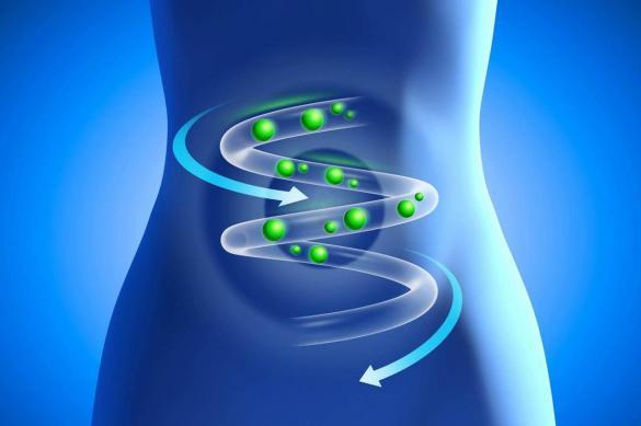 Исследование: бактерии кишечника влияют на память