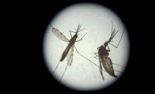 Коронавируса мало: в России ждут комаров-переносчиков лихорадки Западного Нила
