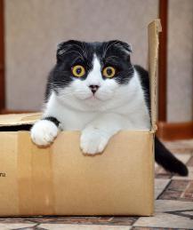 Почему кошки так любят коробки