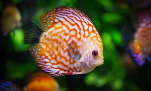 Диапауза помогает рыбам замедлять метаболизм и увеличивать срок жизни