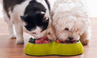 Можно ли собаке кошачий корм?