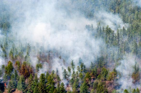 В десяти регионах России борются с лесными пожарами