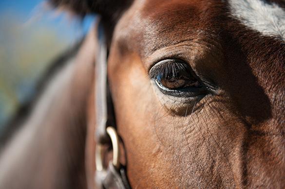 Житель Кубани продал лошадей и коров, за которыми должен был ухаживать