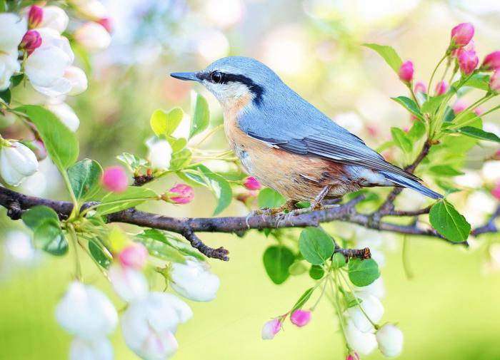 Пение птиц делает человека счастливее