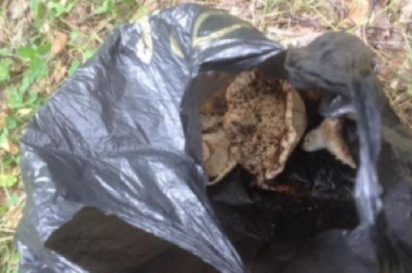 В Челябинской области обнаружили пакеты с человеческими органами