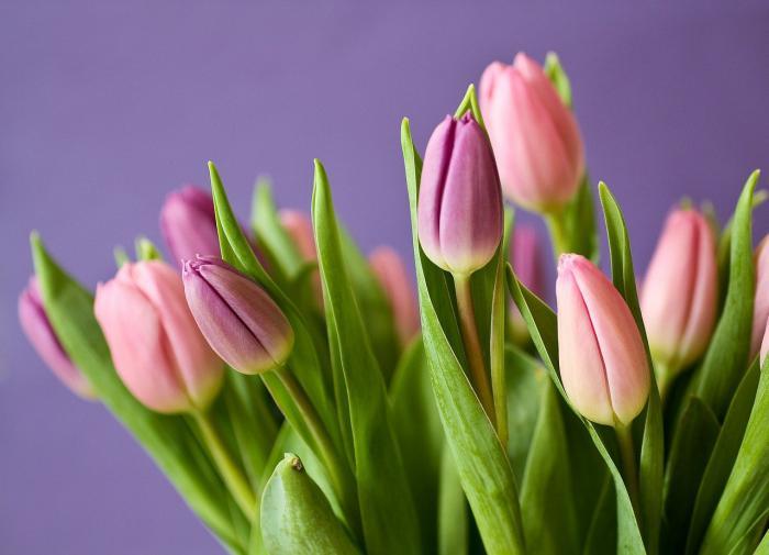 Осень - время сажать тюльпаны