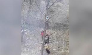 Башкирские школьники спаслись от своры собак на ветках дерева