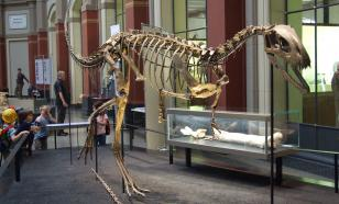 В Австралии впервые обнаружили останки элафрозавра