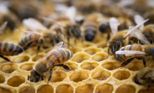 Как пчелы оберегают природу