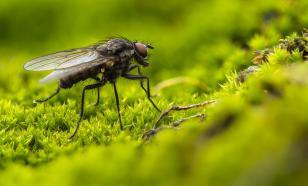 Для чего нужен прототип волосков с лапок мух?