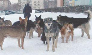 На Урале зоозащитники порезали ножом человека из-за бездомных собак
