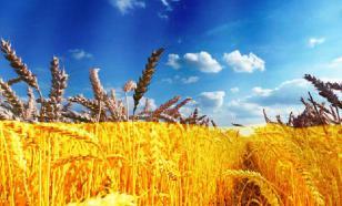 Россия отправила в Саудовскую Аравию первую партию пшеницы